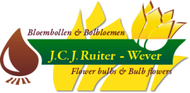 SEO geoptimaliseerde website voor Ruiter Wever uit Andijk